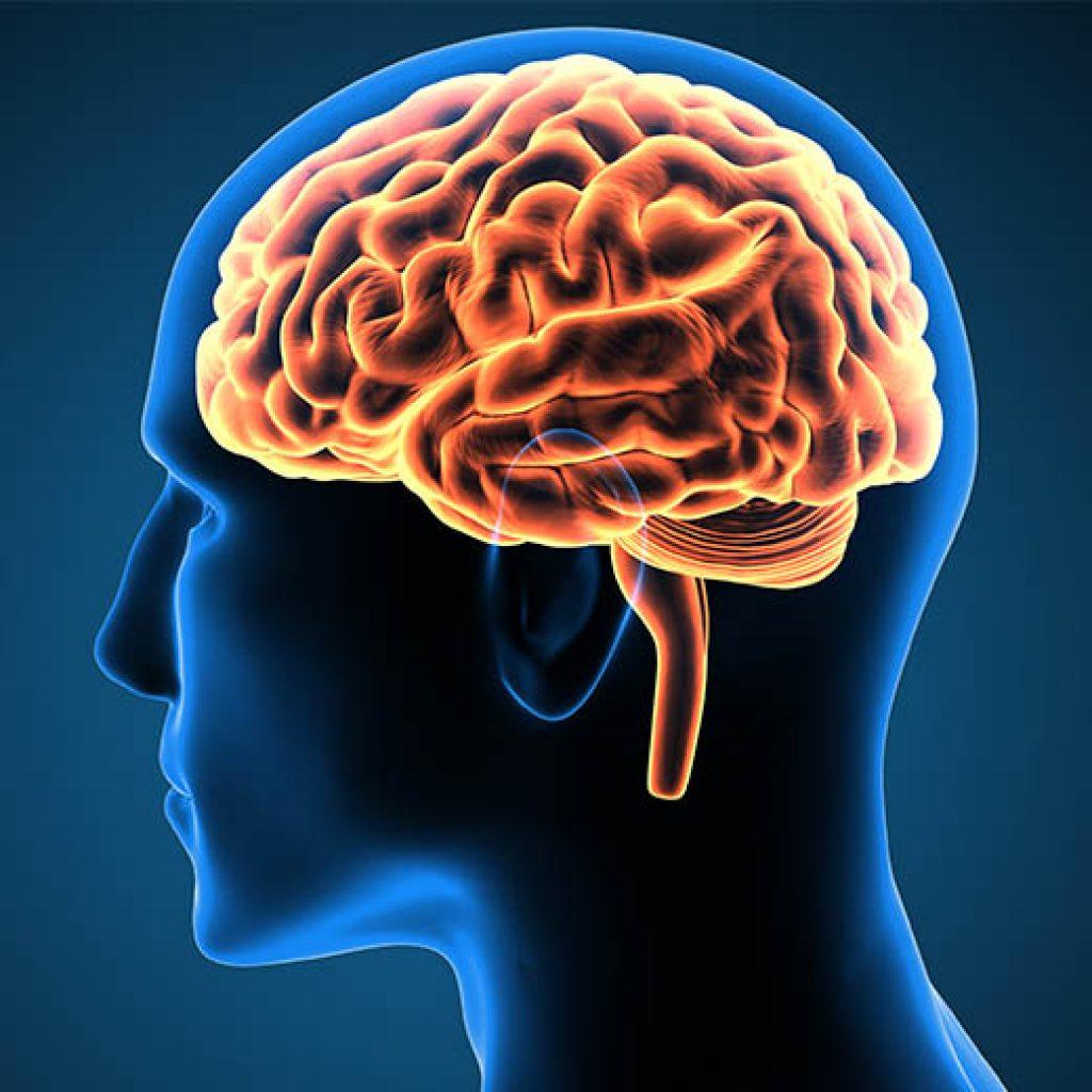 Menschliches Gehirn Illustration